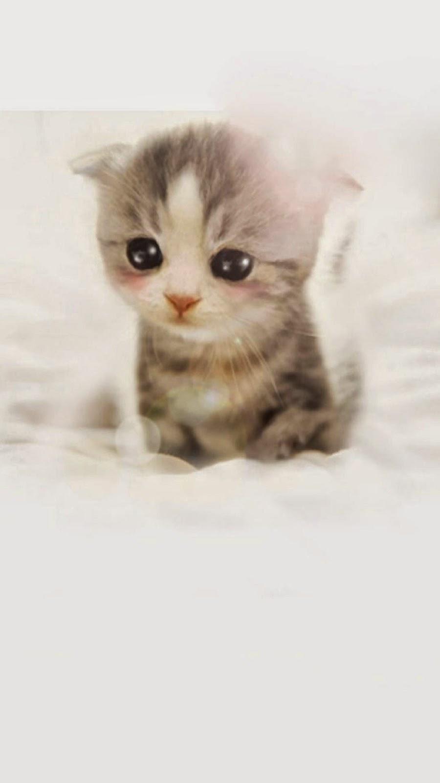 Download Game Kucing Lucu Clocousproplef